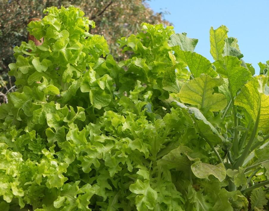 Belle salade bio