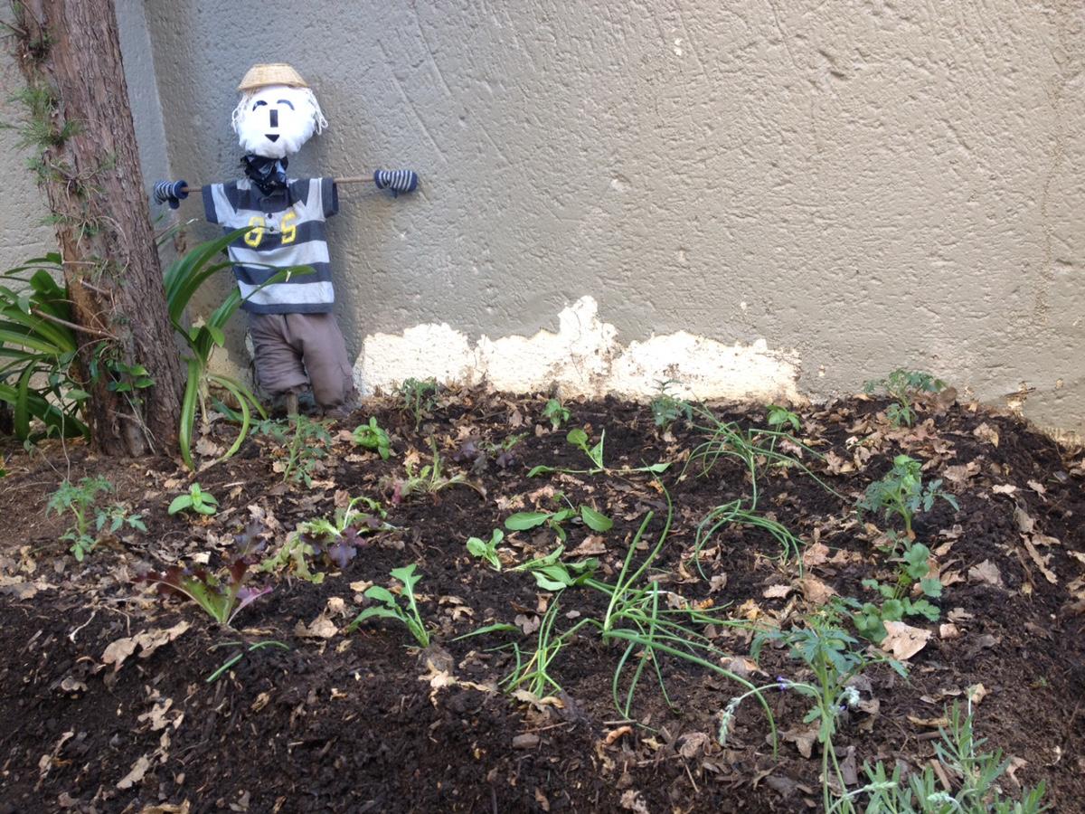 Exp rimenter le jardinage bio gr ce la permaculture for Jardin permaculture 2015