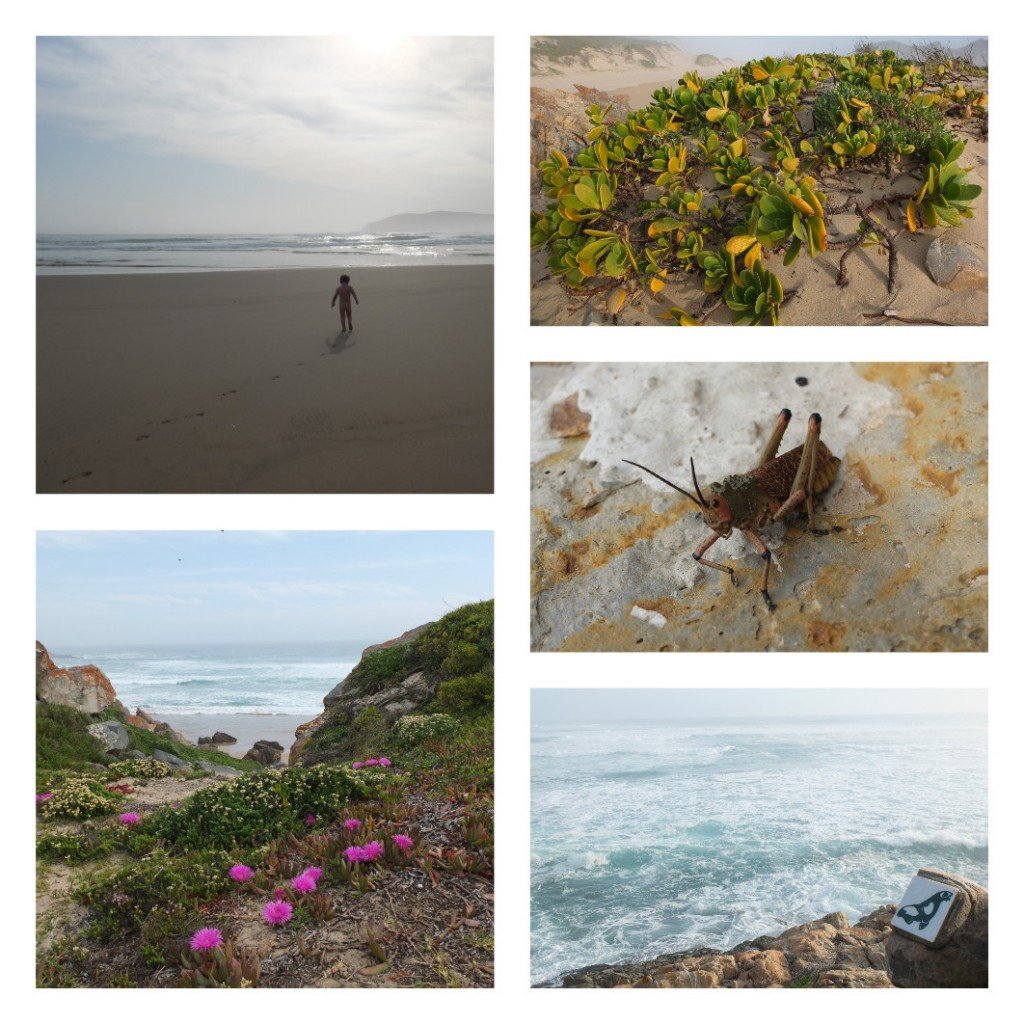 Robberg-nature-reserve