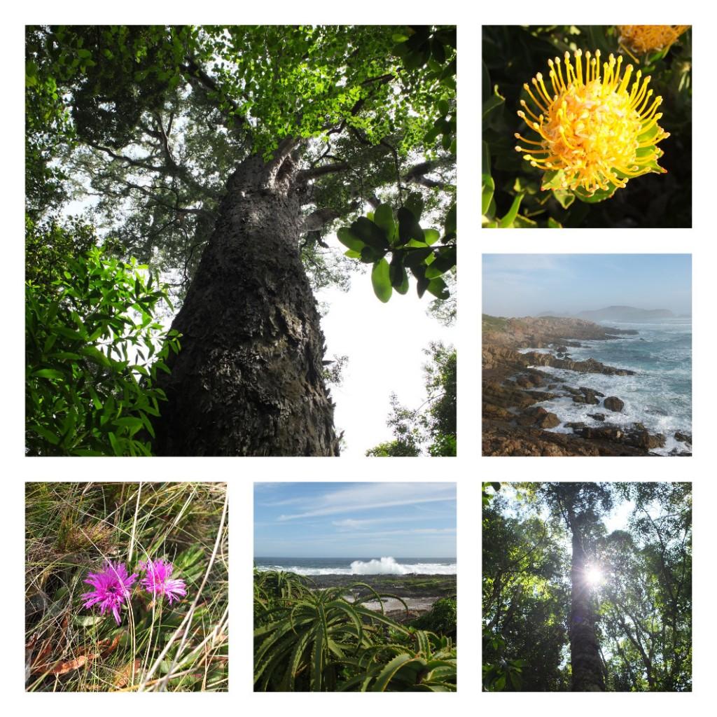 biodiversity-garden-route
