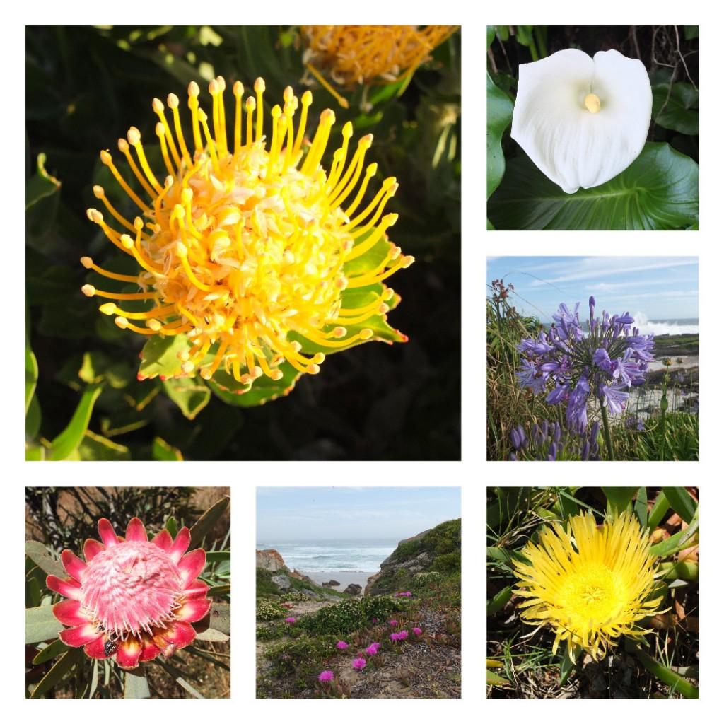 cape-town-flora