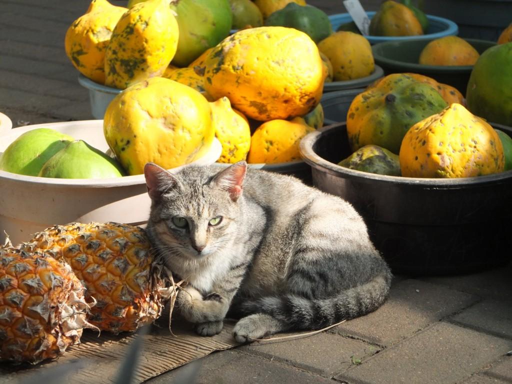 Un chat se prélasse au marché en Afrique du Sud