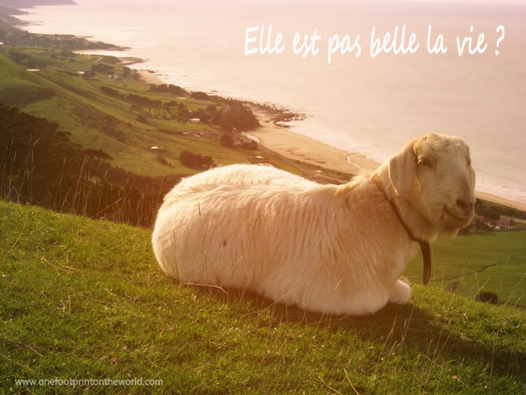 Chèvre zen : elle est pas belle la vie ?