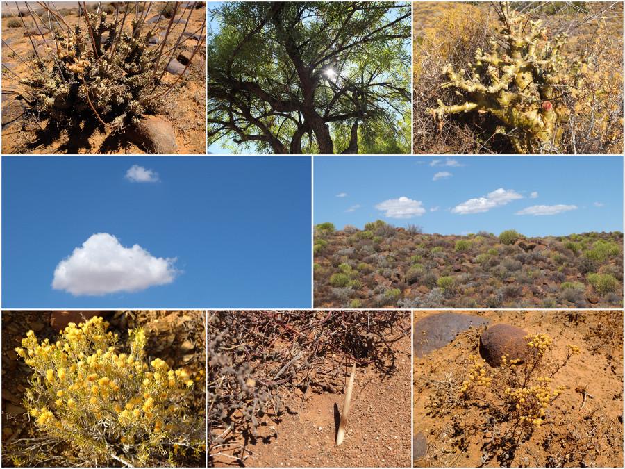 Vegetation, Tankwa Karoo