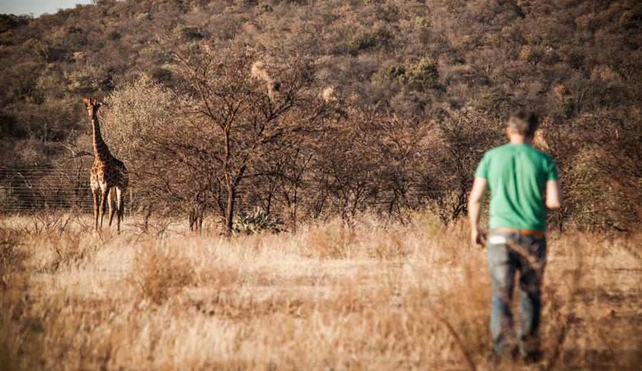 Tout quitter pour le bush - une girafe