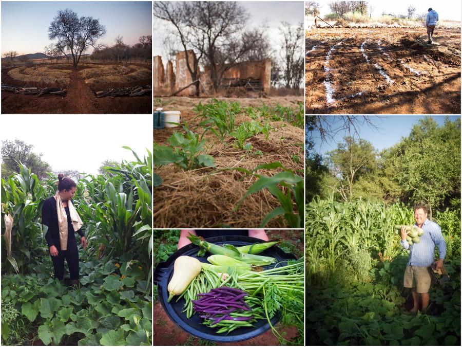 Potager permaculture en Afrique du Sud
