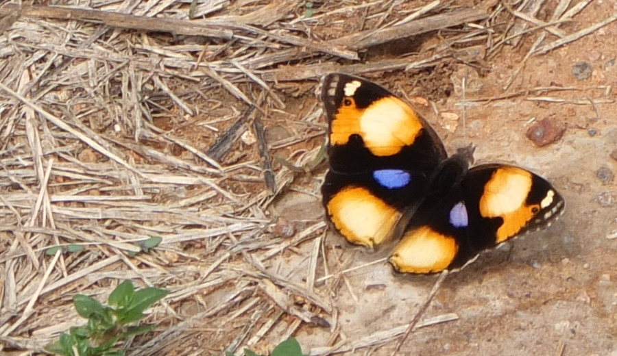 Butterfly at Somabula Nature Reserve