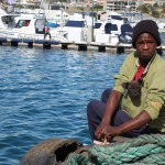 hout-bay-seal (2)