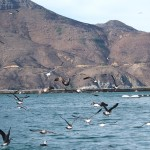 hout-bay-seal (4)